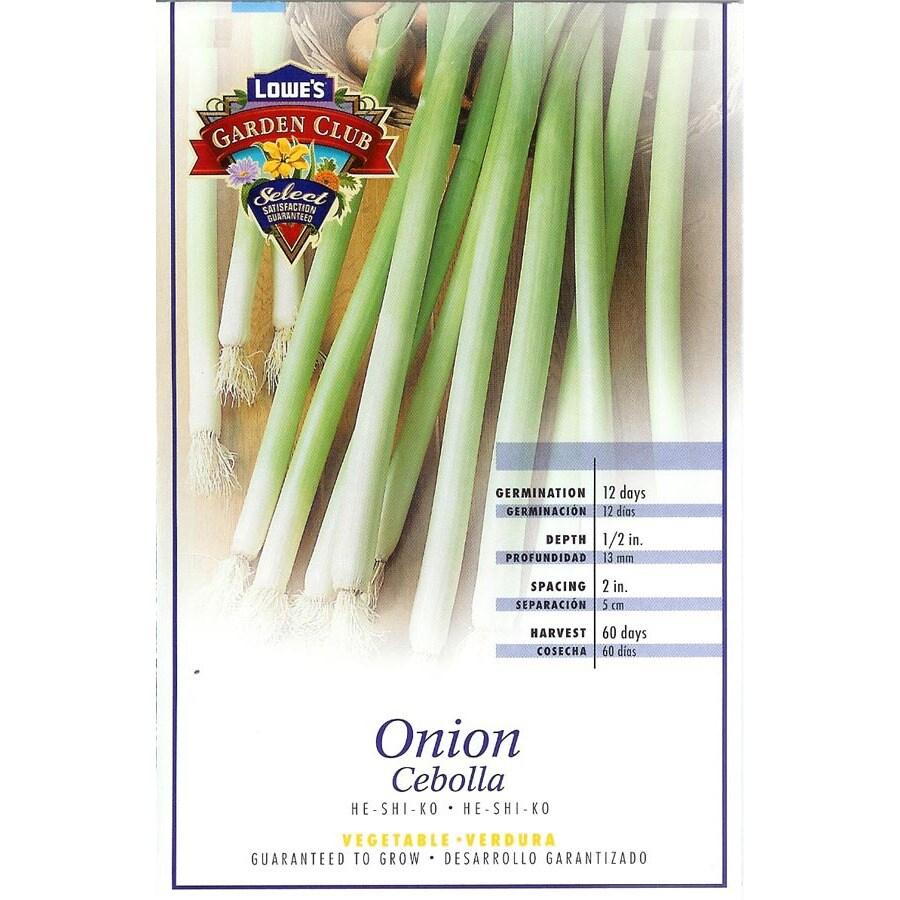 Ferry-Morse He-Shi-Ko Onion Plant (LSP0151)