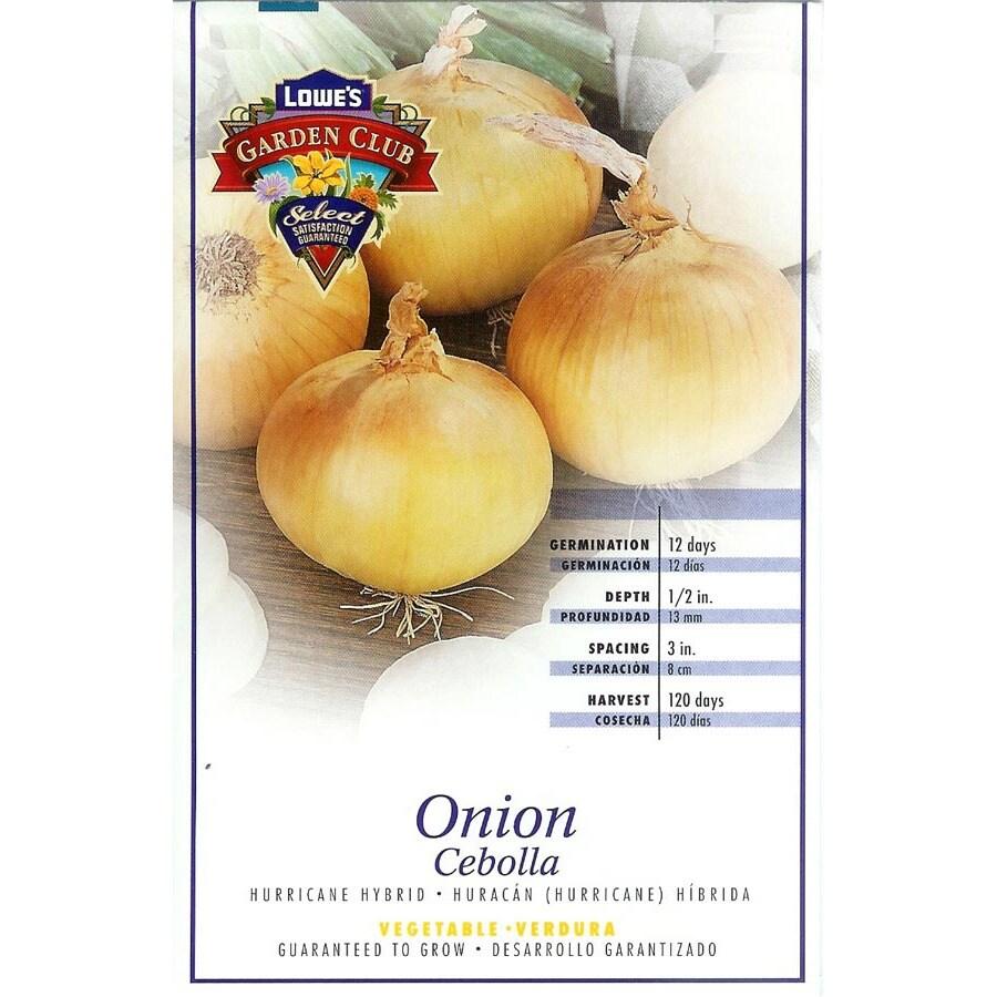 Ferry-Morse Hurrican Hybrid Onion Plant (LSP0152)