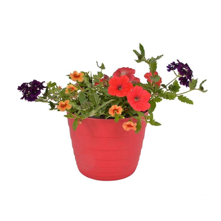 3-Quart Planter Mixed Annuals Combinations
