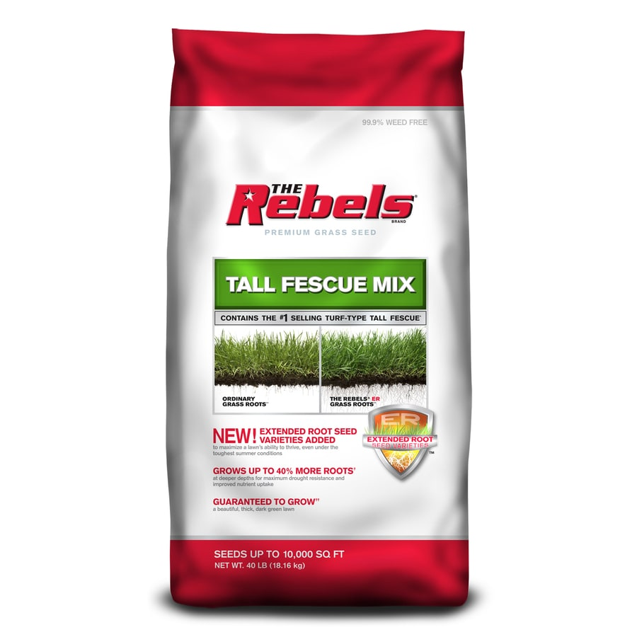 Pennington Premium 40-lb Tall Fescue Grass Seed