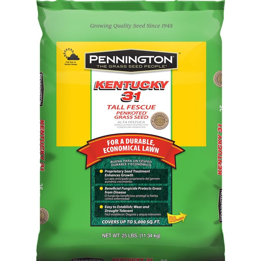 Pennington K-31 25-lb Fescue Grass Seed
