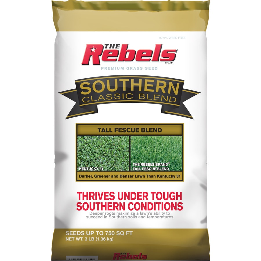 Rebel Southern Classic 3-lb Tall Fescue Grass Seed