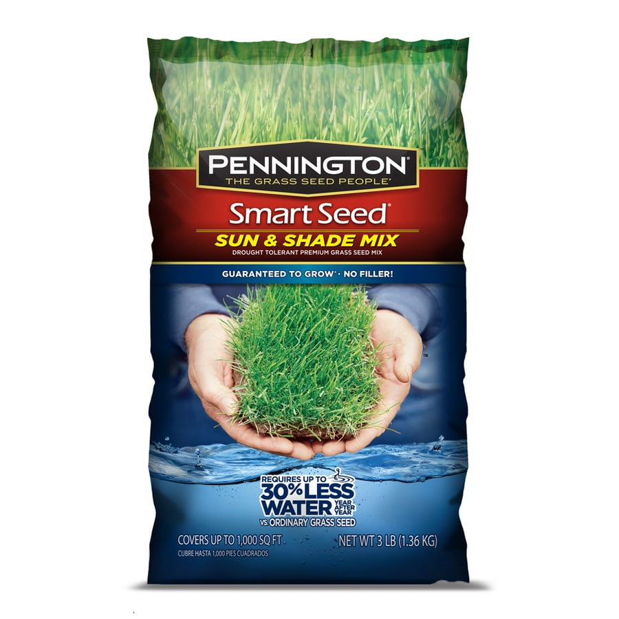 Pennington Smart Seed 3-lb Sun and Shade Fescue Grass Seed Mixture