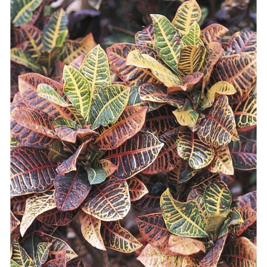 1.4-Quart Croton (L5448)