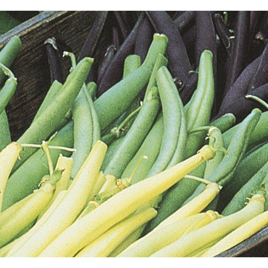 2.5-Gallon Pole Bean Plant (L20568)