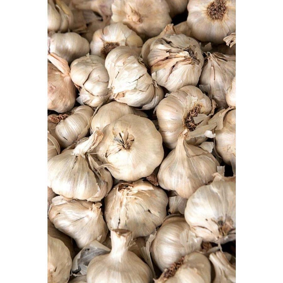 4-Pack Garlic Plant (L20406)