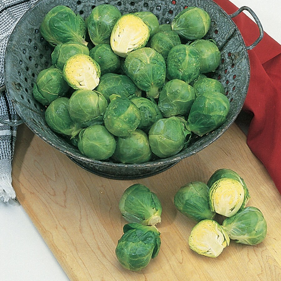 Burpee Igor Brussels Sprouts Seed Packet