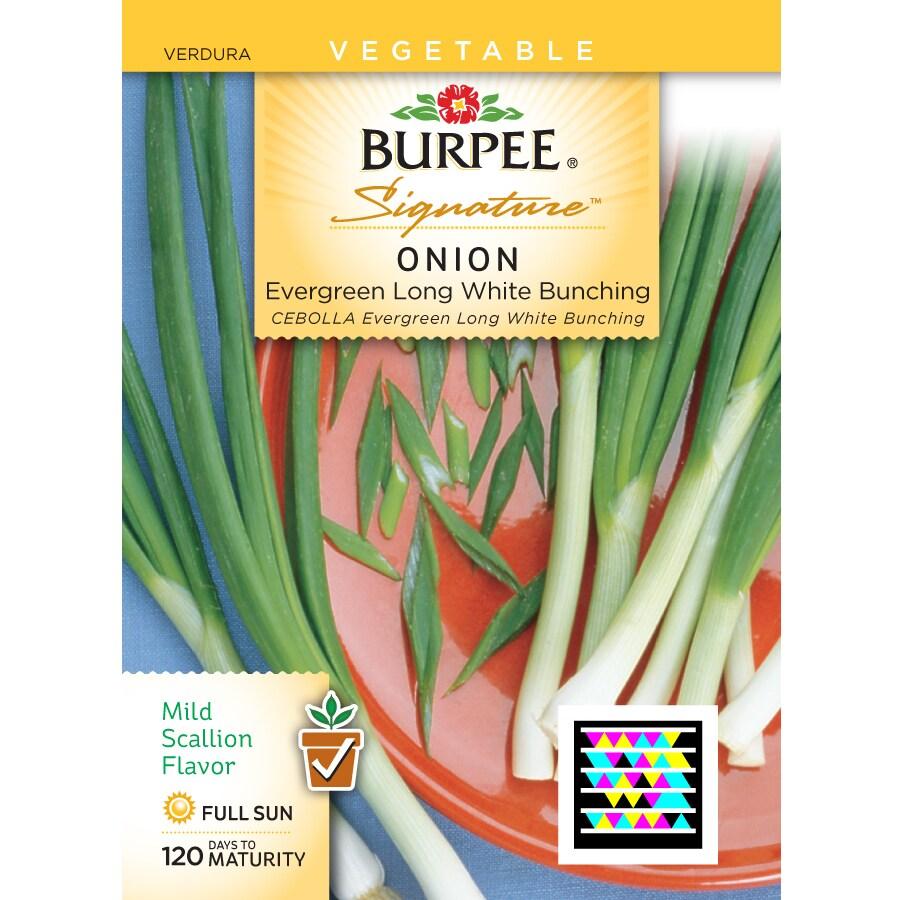 Burpee Onion Vegetable Seed Packet