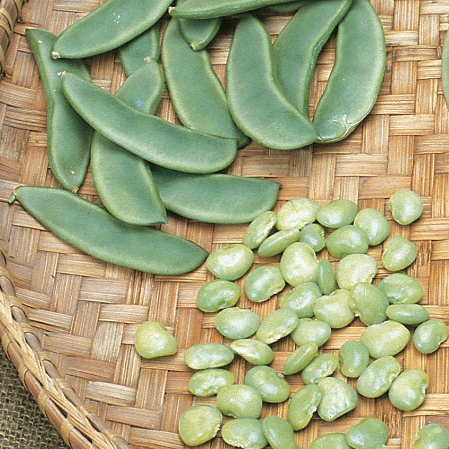 Burpee Improved Lima Bean Seed Packet