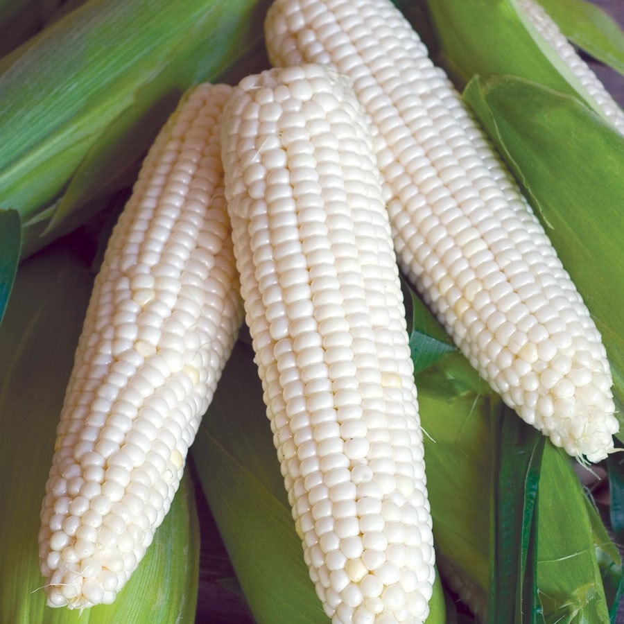 Burpee Triple Crown XP White Hybrid Sweet Corn Seed Packet