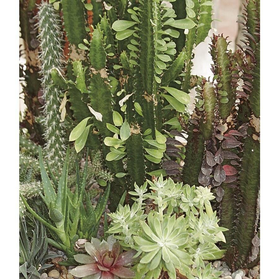 17.9-Gallon Cacti and Succulents (LWALTCS)