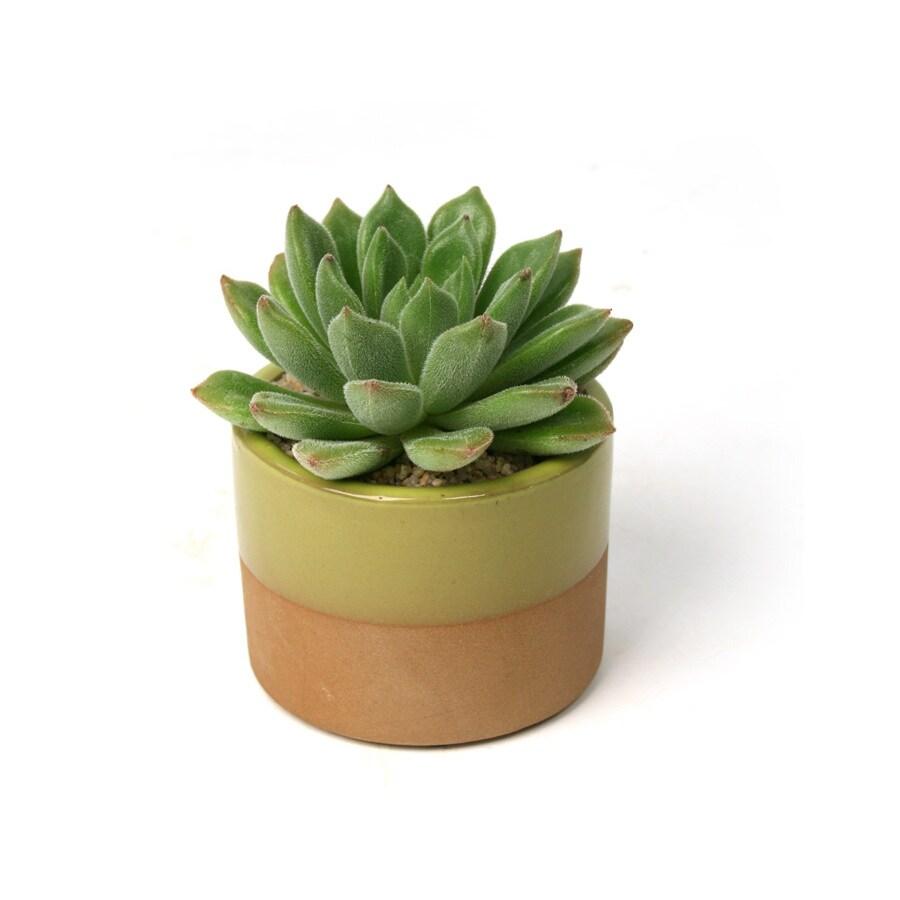 10-oz Mixed Cacti (AL001)