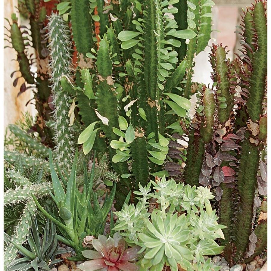 2.6-Gallon Mixed Cacti & Succulents (LWALTCS)