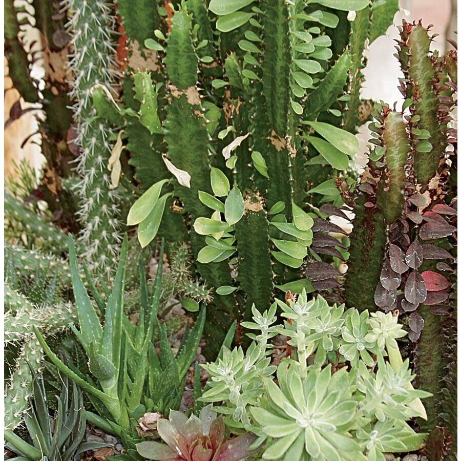 4-oz Cacti and Succulents (LWALTCS)