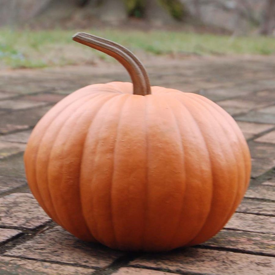 Craft-Tex Harvest Freestanding Pumpkin Sculpture
