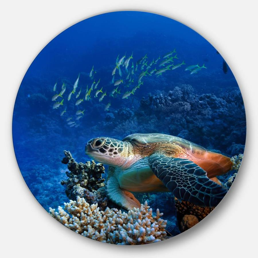#2 Sea Turtle Family on Coral