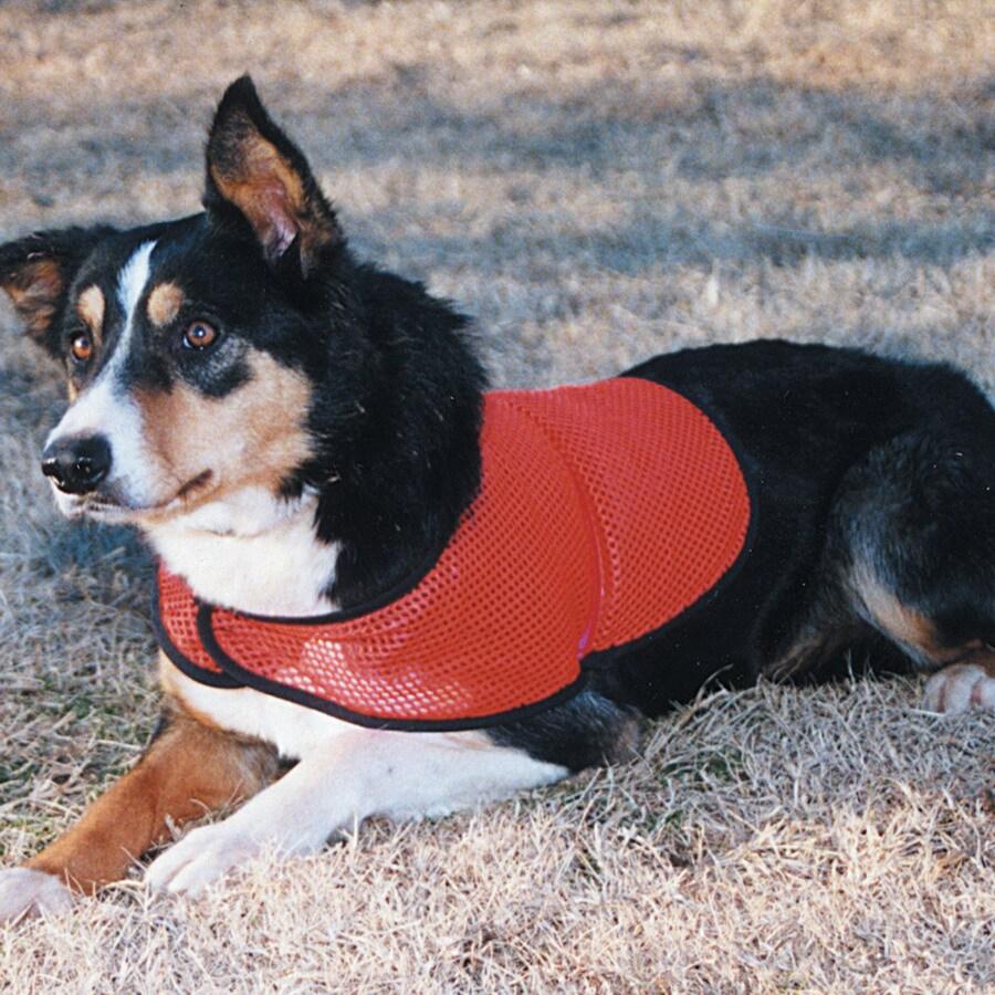 Snoozer Orange Unisex Safety Vest