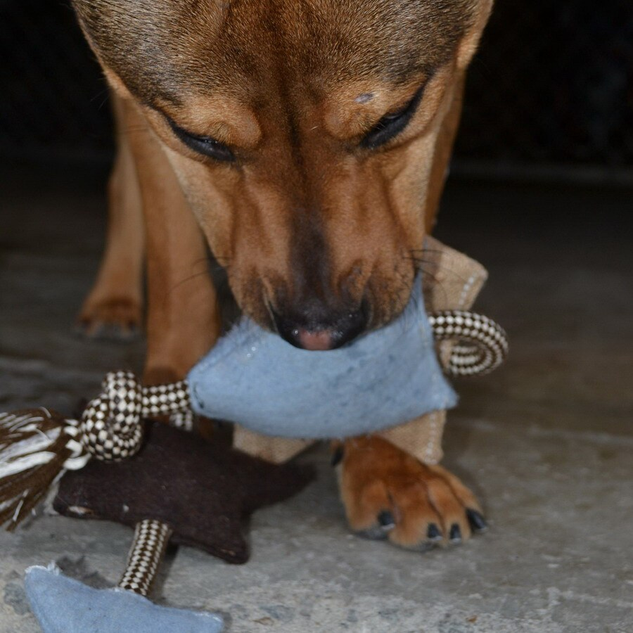 ABO Gear Flavored Fabric Chew Toy