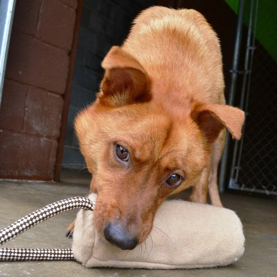 ABO Gear Fabric Toss and Retrieve Dog Toy