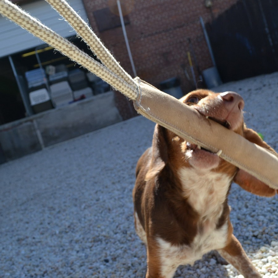 ABO Gear Tug/Rope Toy