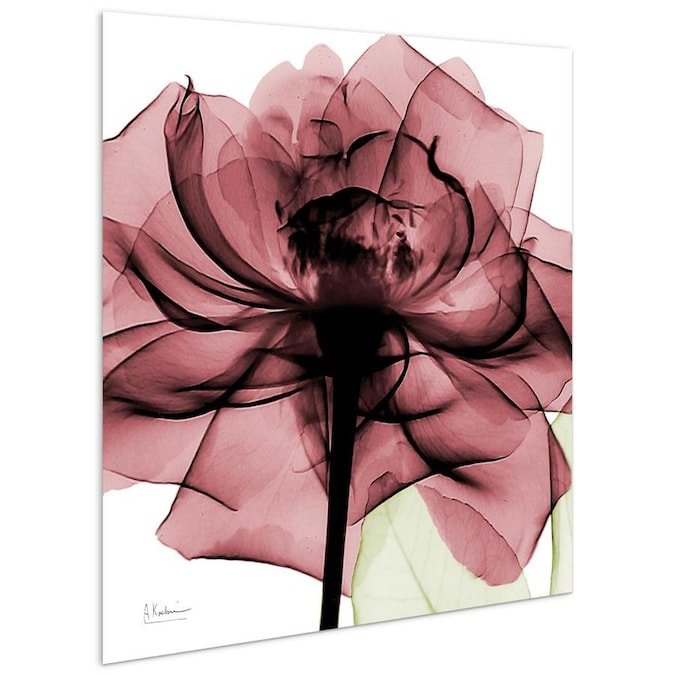 Rose Home Decor Pink Rose x-ray photography Black Framed Wall Art Print