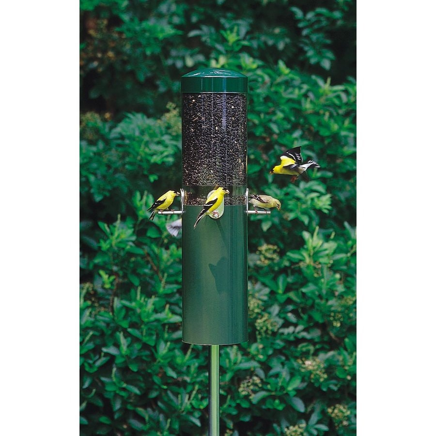 Birds Choice Steel Squirrel-Resistant 1.2-Gallon Tube Bird Feeder