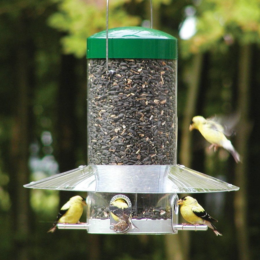 Shop Birds Choice Steel Squirrel Resistant 1 2 Gallon Tube