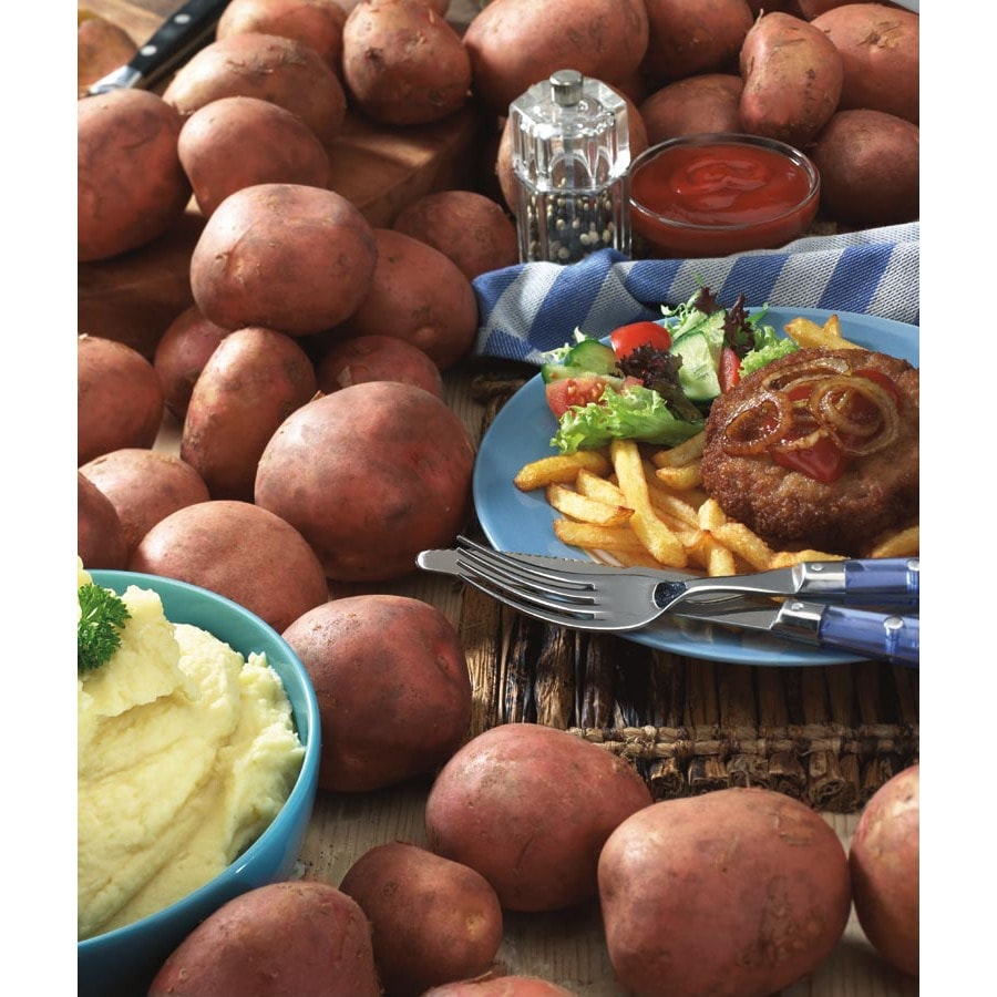 Garden State Bulb 8-Pack Red Norland Potato Plant (LB21814)