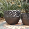 Up to 50% (or more) Off Plants  Planters @ Lowe's online deal