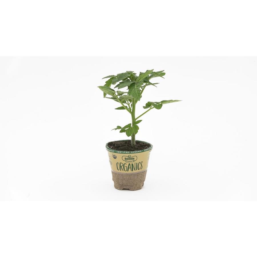 Bonnie 19.3-oz Assorted Plant