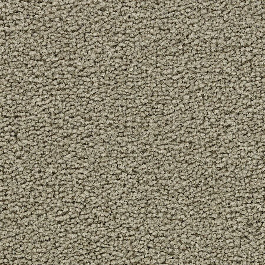 Coronet Cherish Tan Cut Pile Indoor Carpet