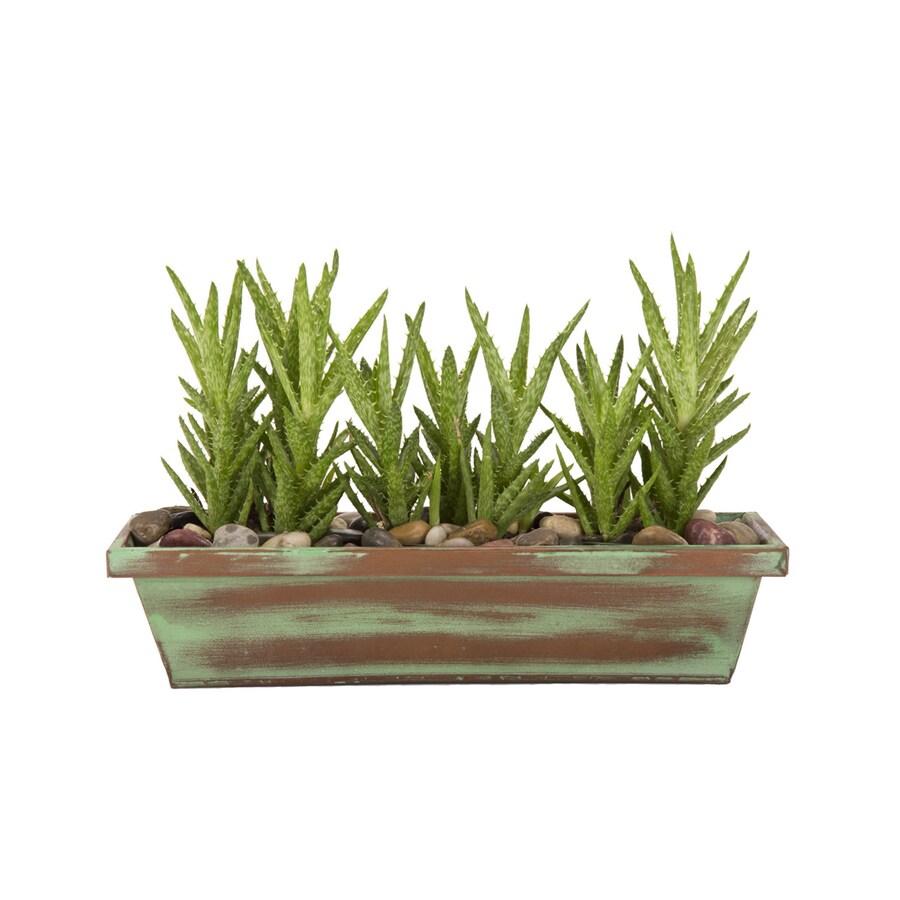 Exotic Angel Plants 1.88-Quart Aloe