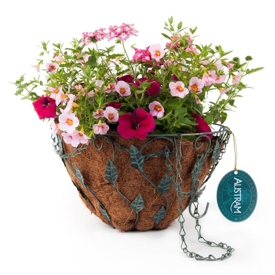 Crescent Hot Pink Jazz Antique Brass with Patina Hanging Basket Kit