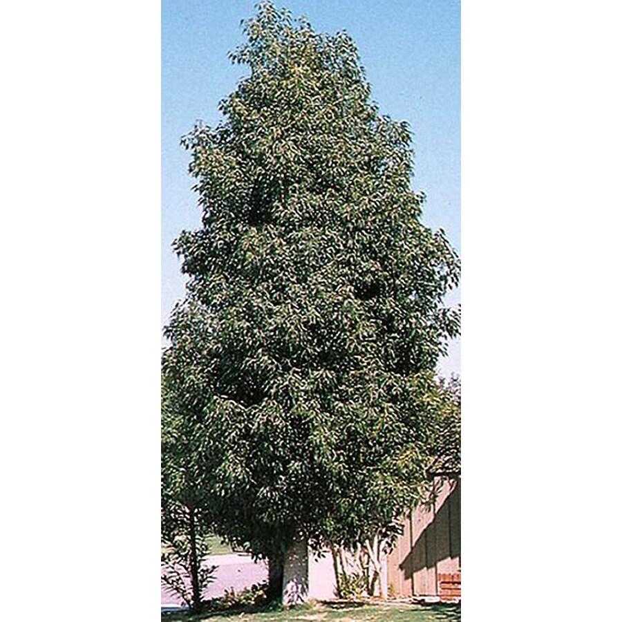 10.25-Gallon Bottle Tree Feature Tree (L4000)
