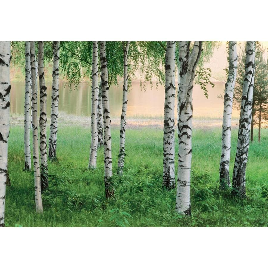 Shop brewster wallcovering ideal decor scenic murals at for Brewster birch wall mural