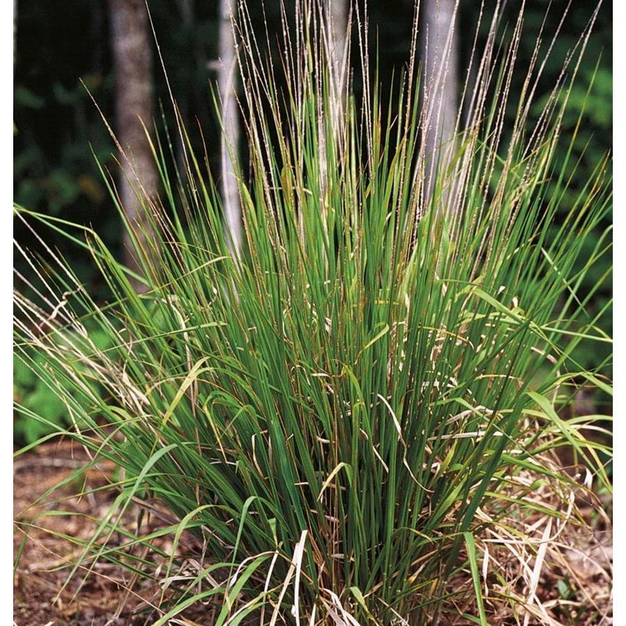 1-Gallon Garden Phlox (L6680)