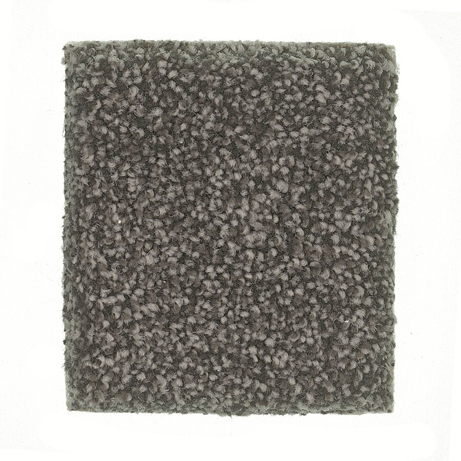 STAINMASTER PetProtect Greyhound - Feature Buy Afghan Textured Indoor Carpet