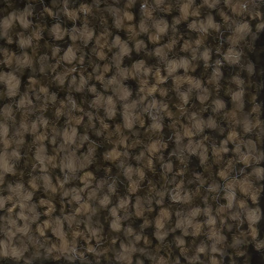 STAINMASTER TruSoft Dynamic Beauty 3 Fudge Textured Indoor Carpet