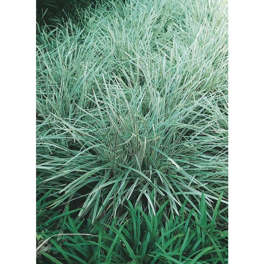 3-Quart Aztec Grass (L14234)