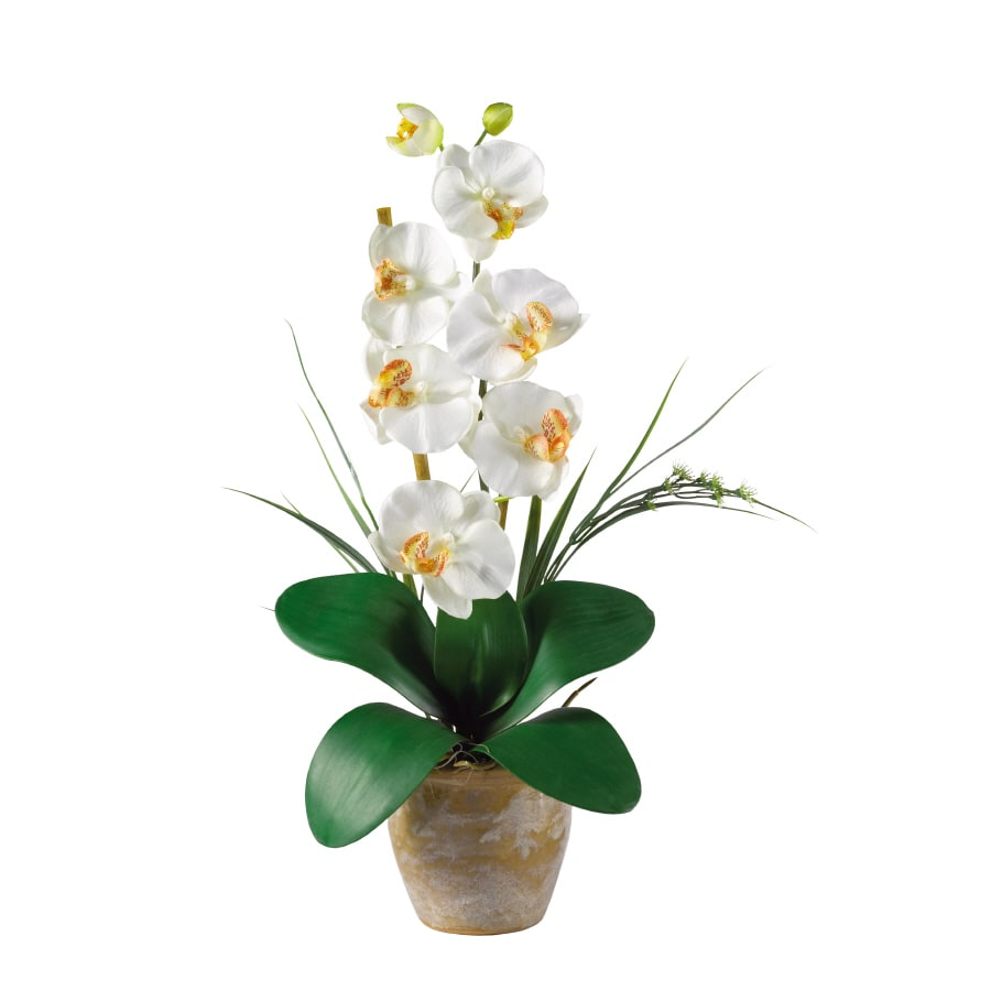 Nearly Natural 9-in Cream Phalaenopsis