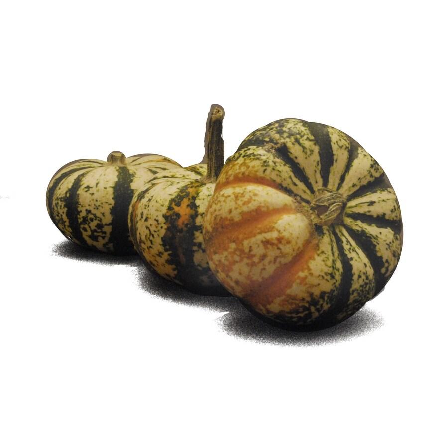 Assorted Autumn Couleur Variety Pumpkin