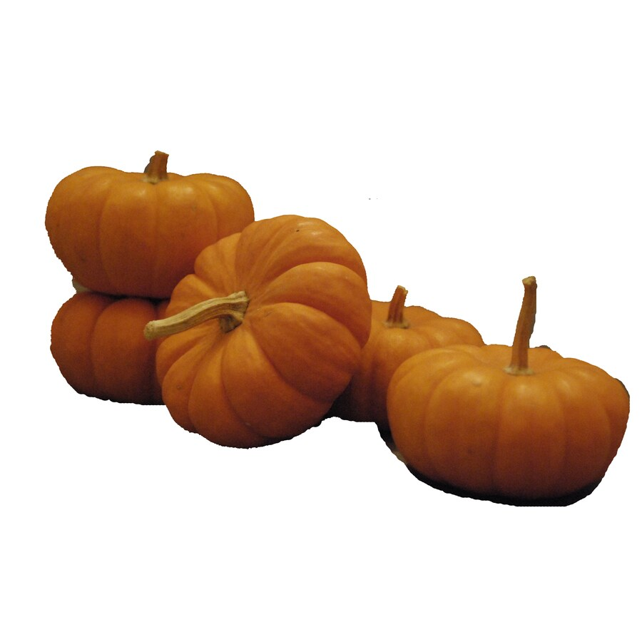 5-Pack Orange Ornamental Pumpkin Bundle