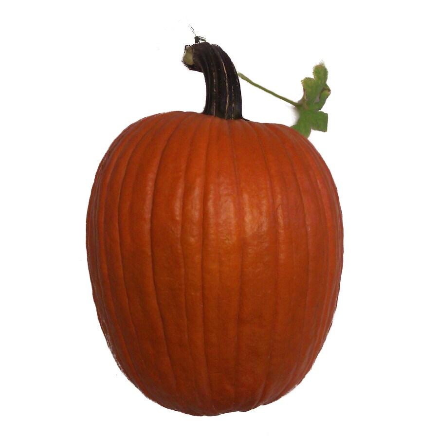 Orange Large Carving Pumpkin