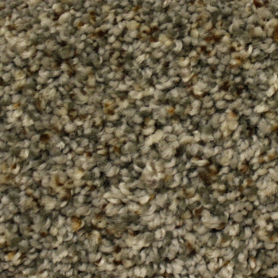 Shop STAINMASTER PetProtect Georgetown Express First Launch Textured Indoor Carpet At Lowescom