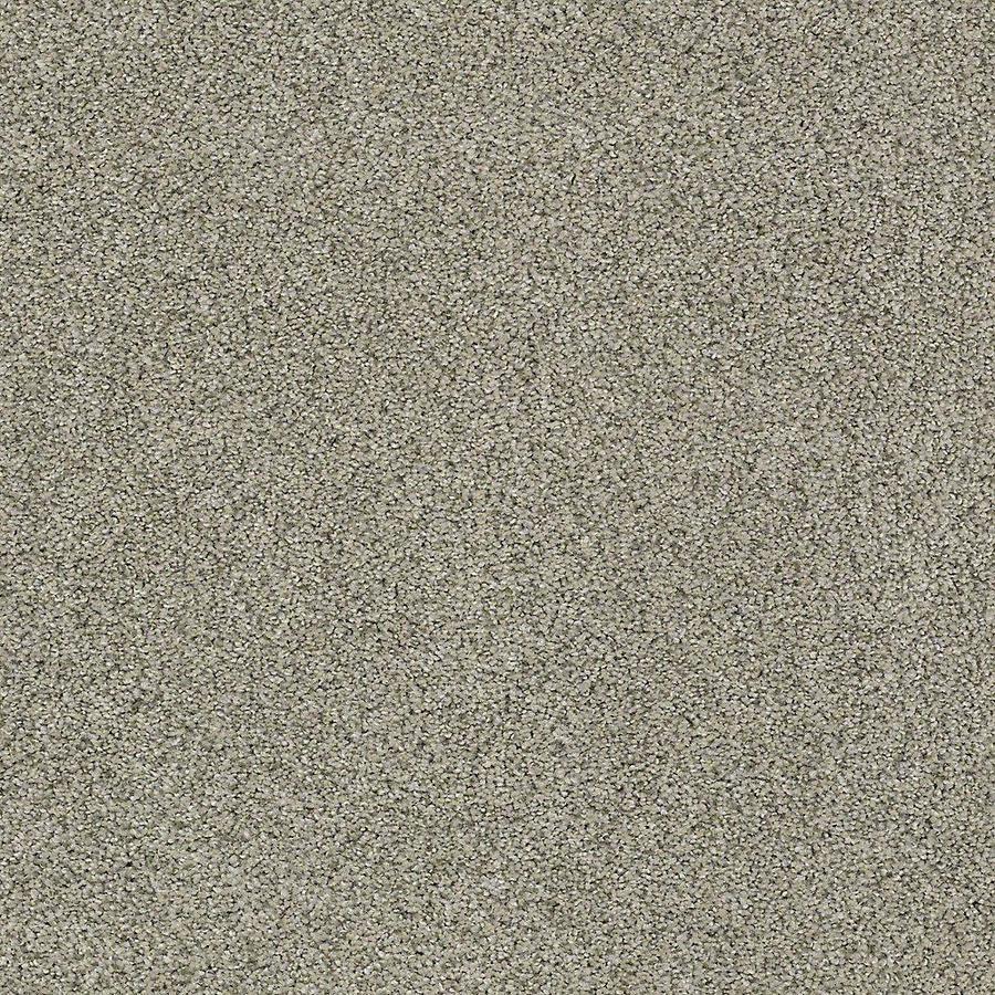 STAINMASTER Baxter IV PetProtect Bandit Plus Carpet Sample