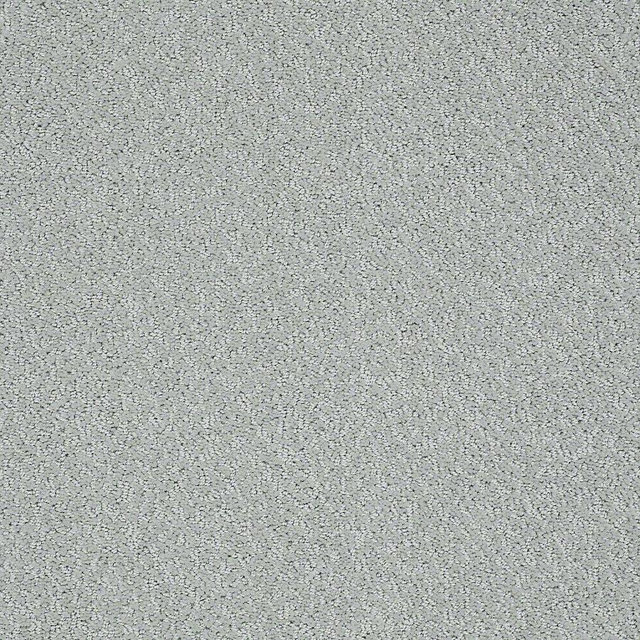 STAINMASTER Bianca PetProtect Barker Cut and Loop Carpet Sample