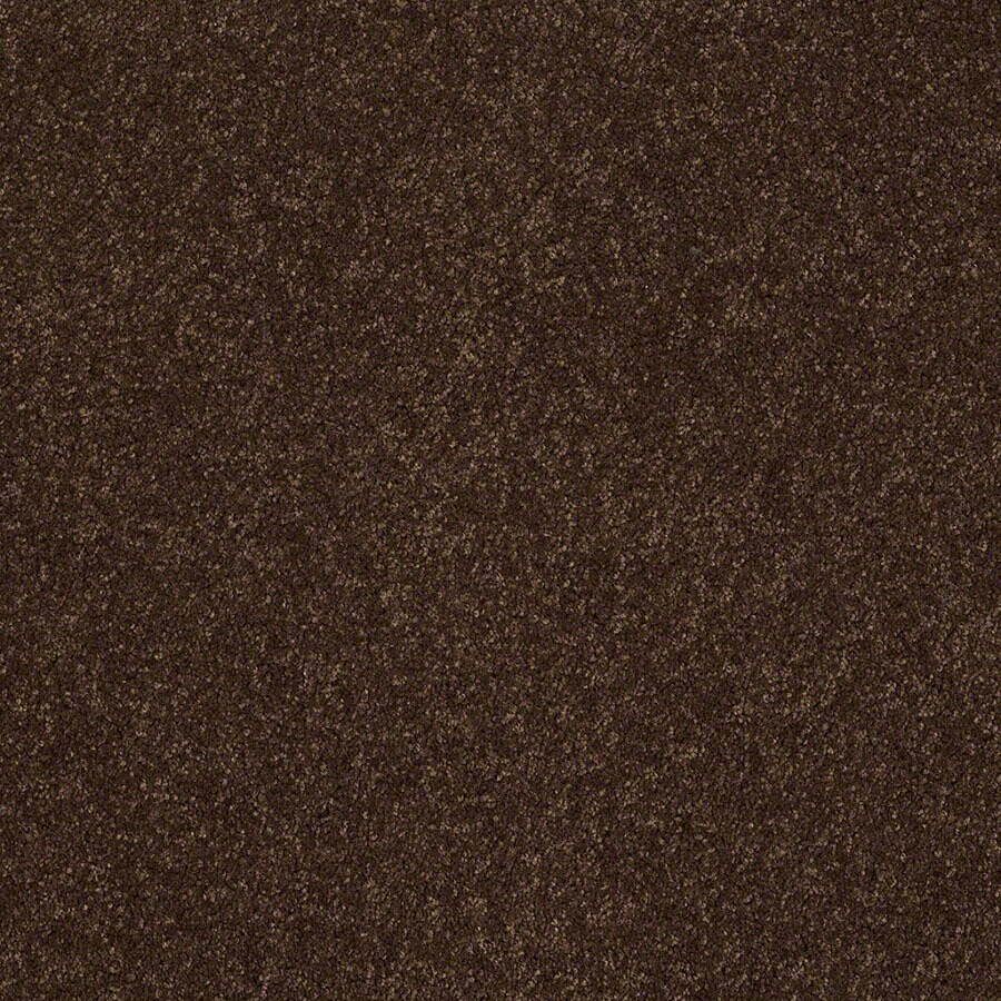 STAINMASTER Supreme Delight Active Family Decaf Plus Carpet Sample