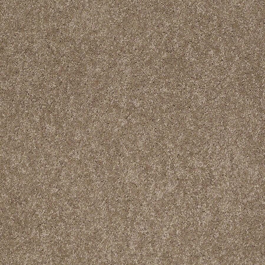 STAINMASTER Supreme Delight Active Family Hazelnut Plus Carpet Sample