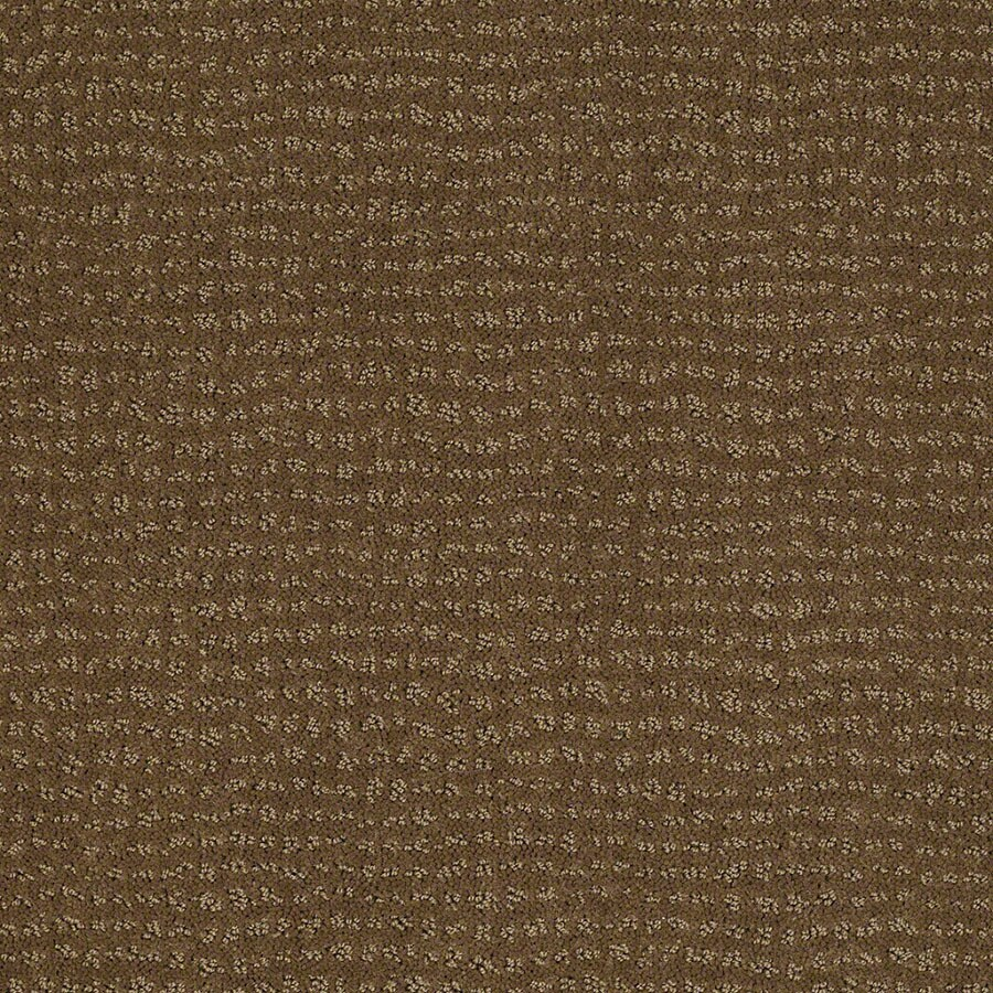 STAINMASTER Undisputed Active Family Toasted Coconut Cut and Loop Carpet Sample