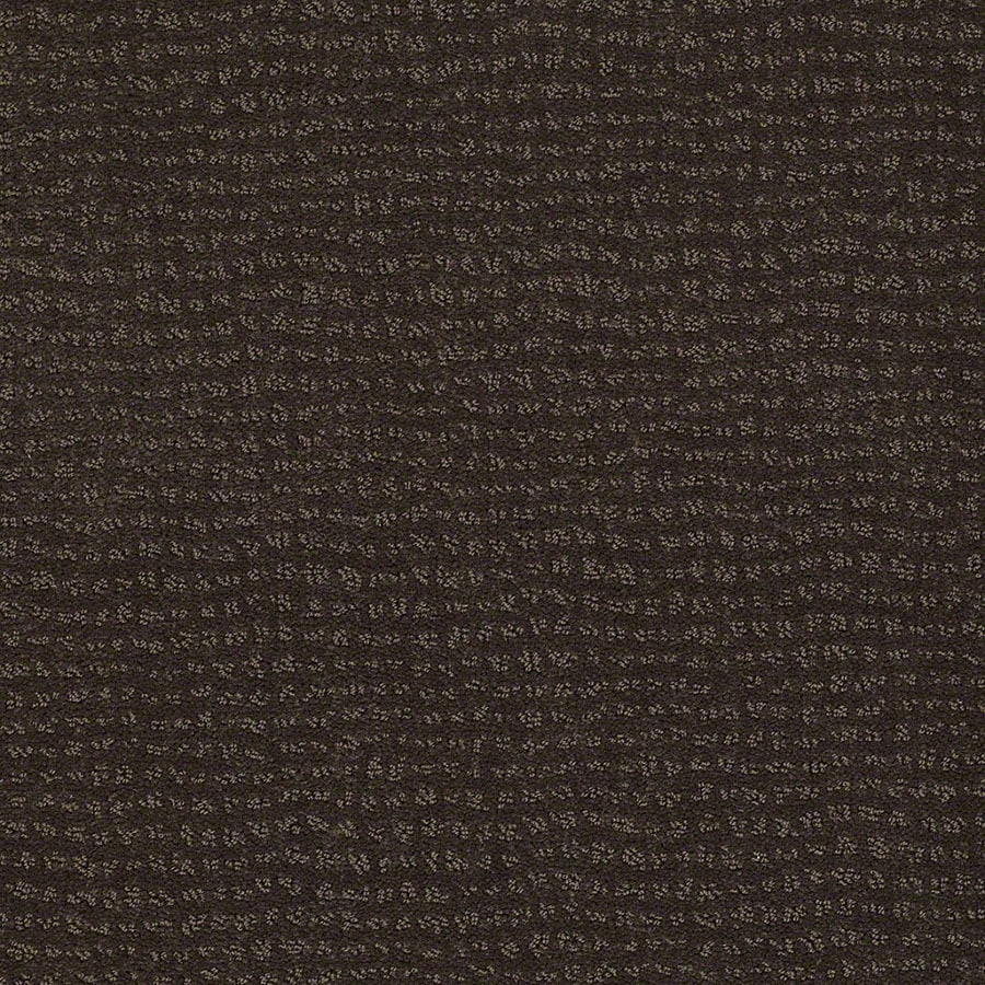STAINMASTER Undisputed Active Family Dark Earth Cut and Loop Carpet Sample